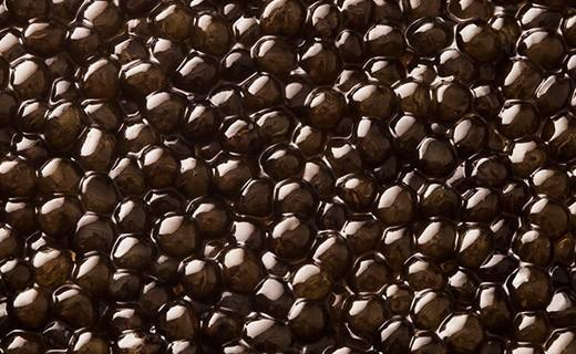 Caviale Oscietra Prestigio 50g - Kaviari