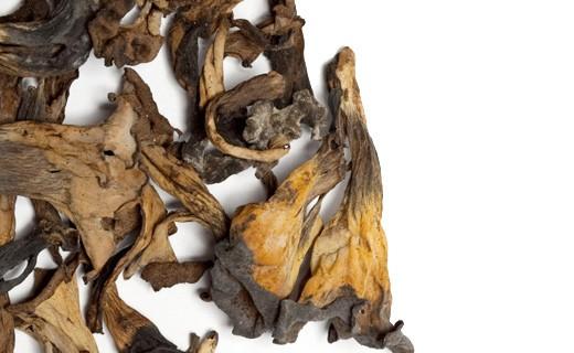 Trombette dei morti secche - La Maison du Champignon