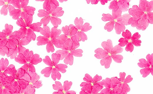 Fiori commestibili secchi di verbena rosa  - Neworks