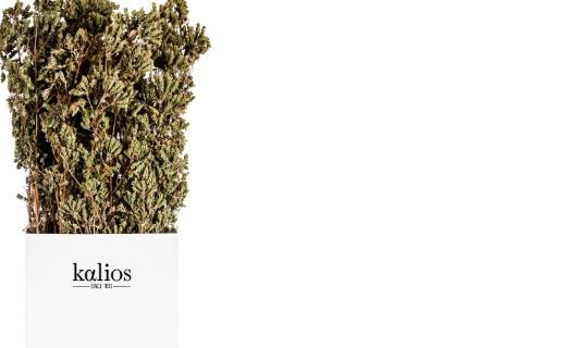 Rametti di origano - Kalios